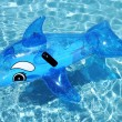 Inflatable dolphin on blue swimming pool — Stock Photo #6232941