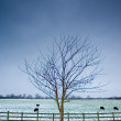 Lone tree next to a wintery field with black sheep - Stock Photo