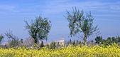 Exteriér paláce alhambra v granadě — Stock fotografie