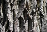 The bark of the tree. — Stock Photo