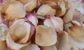 Pétalos de rosa secos. — Foto de Stock