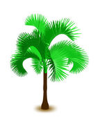 Palm tree. Vector — Stock Vector