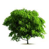 Zelený strom. vektor — Stock vektor