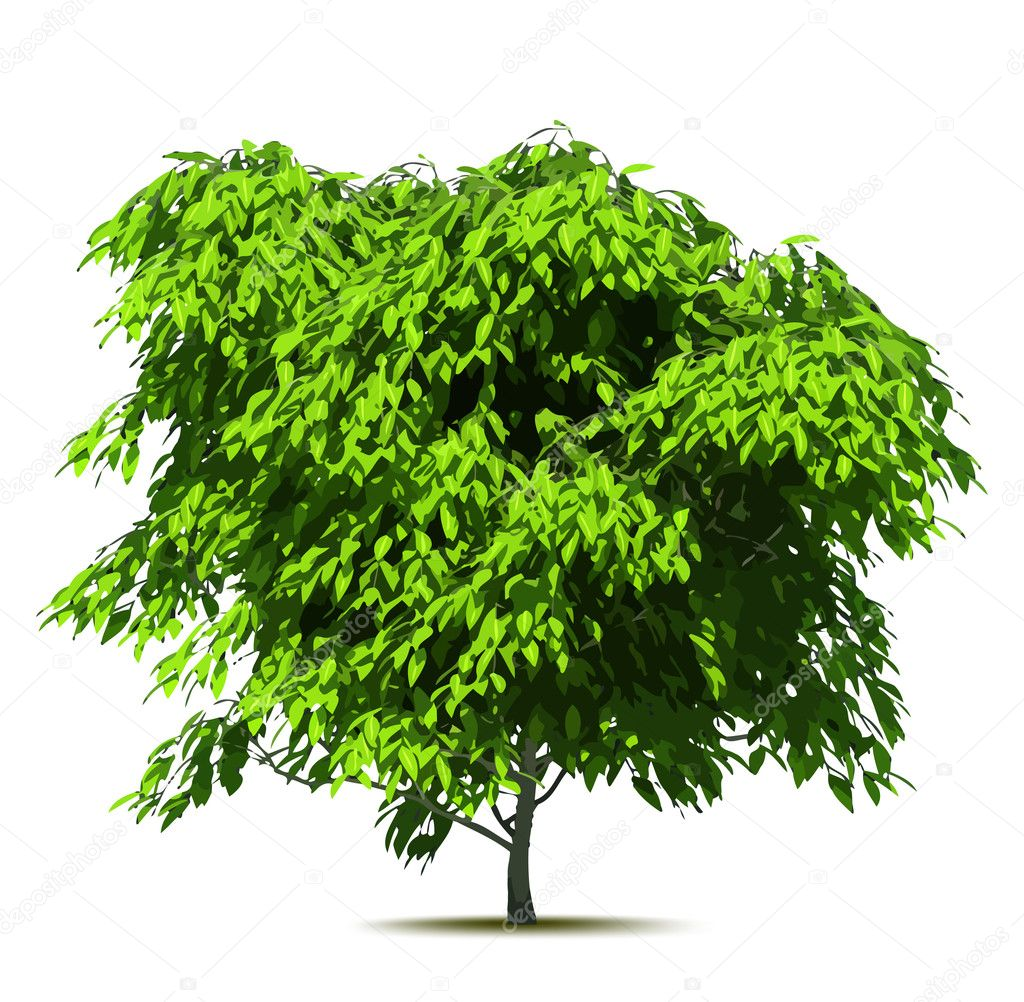 Green tree. Vector illustration isolated on white over — Stock Vector #5912052