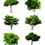 Ange träd. vektor — Stockvektor