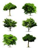 Zestaw drzewo. wektor — Wektor stockowy