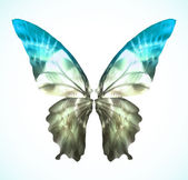 Vibrant blue Butterfly Isolated. Vector — Stock Vector