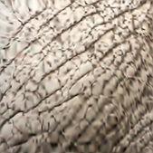 Djur elefant konsistens. vektor — Stockvektor