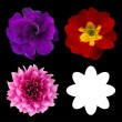 Set of flower heads isolated on black. Vector - Imagen vectorial