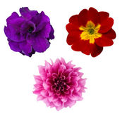 Set of flower heads isolated on white. Vector — Stock Vector