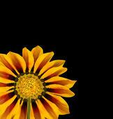 Sunflower Over Black. Vector — Stock Vector