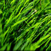 Green grass texture. Vector — Stockvector