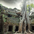 Temple of Ta Prohm in Angkor Wat — Stock Photo #5380421