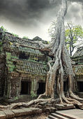 Temple of Ta Prohm in Angkor Wat — Foto de Stock
