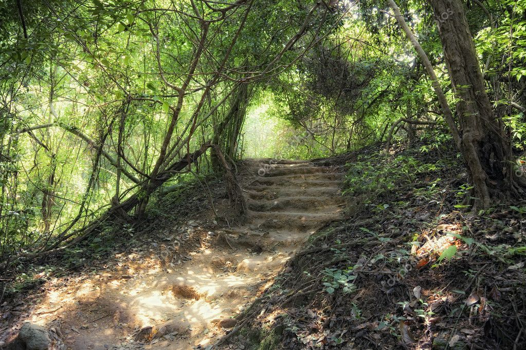 Step way in deep forest — Stock Photo #5380401