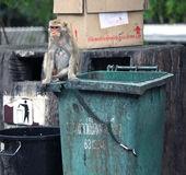 Thailand monkeys — Stock Photo