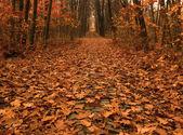 осенний путь через лес — Стоковое фото