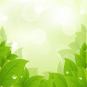 Fresh And Green Leaves — Stock Vector