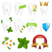 Tooths Set — Stock Vector
