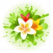Vector de stock : Abstract Plumeria
