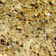 Dry ground texture — Stock Photo #6204430