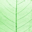 Green Leaf in Structure — Stock Photo