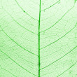 Royalty-Free Stock Photo: Green Leaf in Structure