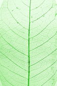 Zielony liść w strukturze — Zdjęcie stockowe