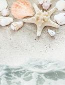 Zee strand met schelpen rand — Stockfoto