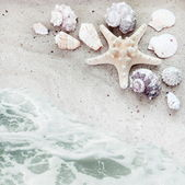 Sea Shells and Serf Background — Stock Photo