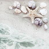 Zeeschelpen en horige achtergrond — Stockfoto