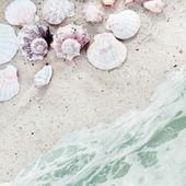 Zeeschelpen en horige vierkante achtergrond — Stockfoto