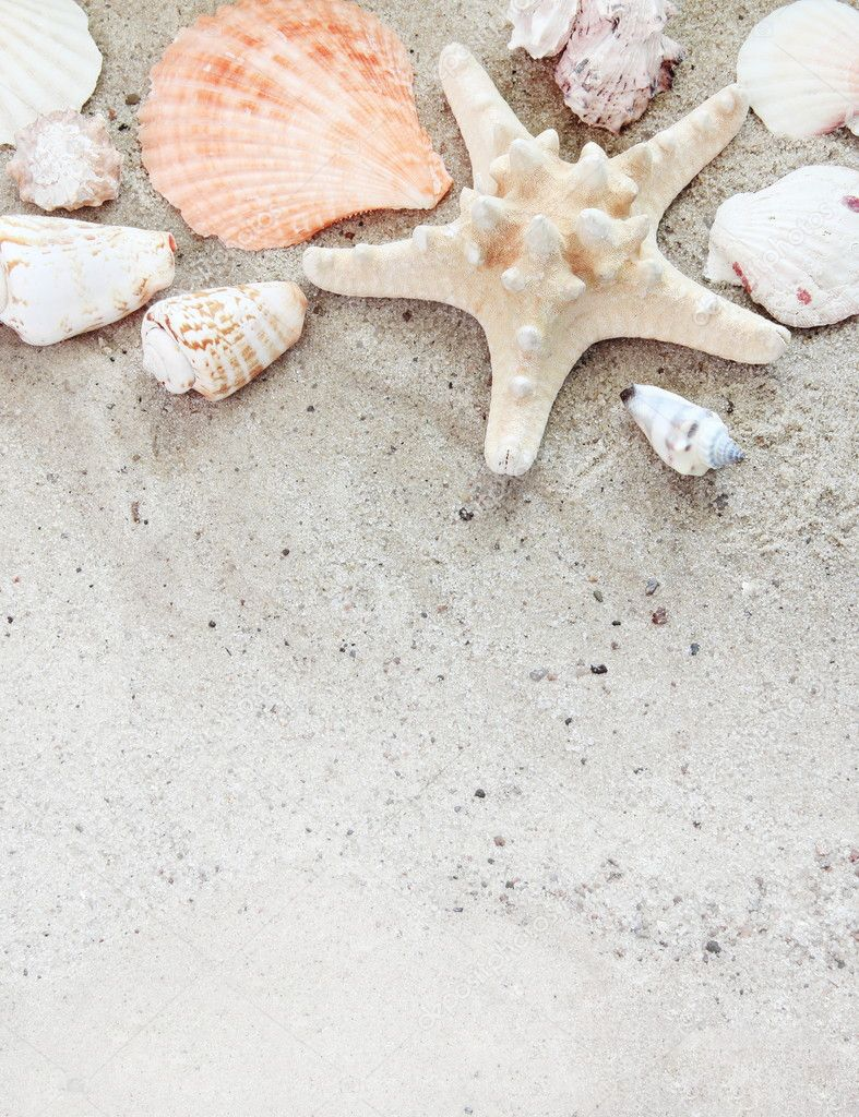Shells in white sand HD wallpaper #2119257
