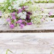 Curative Blooming Herbs and Floowers — Stock Photo