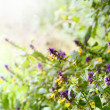 Wild Flowers with Sunshine Border — Stock Photo