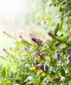 Wild Flowers with Sunshine Border — Stock Photo
