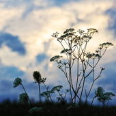 Silhueta floral flor — Foto Stock
