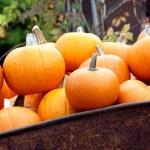 Halloween pumpkin — Stock Photo #6052425