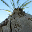 Macro palm — Stock Photo