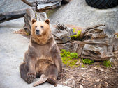 Sitting bear — Stock Photo