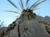 Macro palm — Stock Photo