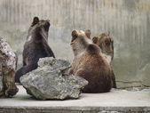 Sitting bears — Stock Photo