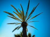 Blue palms — Stock Photo