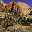 Zion National Park — Stock Photo #5434256