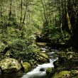 Slow moving creek - Stock Photo