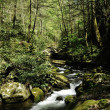 Slow moving creek - Stockfoto