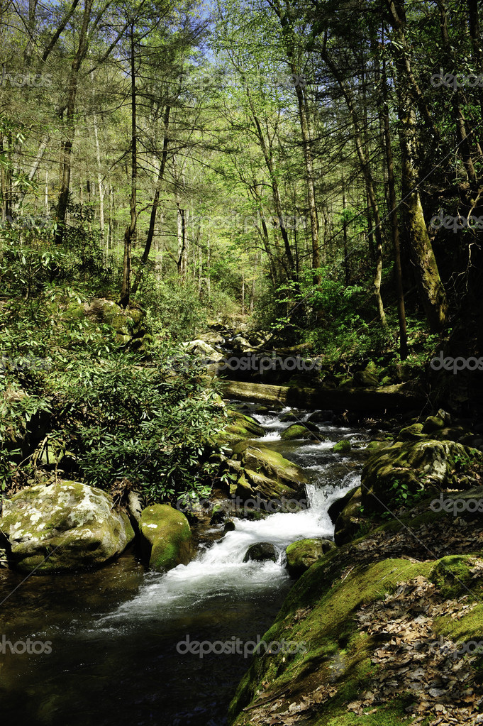 A slow moving creek winding thru the forest in spring  Stock Photo #5482641
