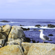 Sea Gull at the Ocean — Stock Photo #5680454