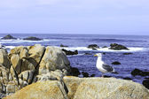 Sea Gull at the Ocean — Stock Photo