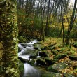 Fall In The Smokey Mountains — Stock Photo